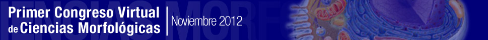 morfovirtual2012